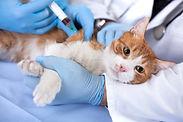 pet-vaccines.jpg