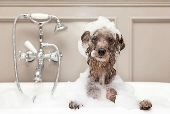 Dog_in_bath_adogslifephoto_Fotolia_large