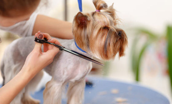 pet-grooming-service.jpg
