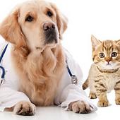pet_vaccines.png