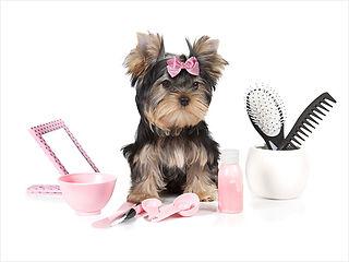spa puppy.jpg