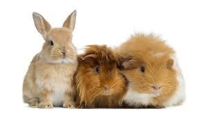 small pets.jpg