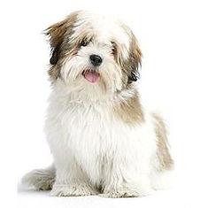 medium dog.jpg