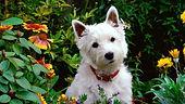 Dog-in-the-garden-960x540.jpg