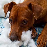 Puppy-proofing-basics.jpg