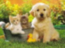 spring_holiday_pet_tips_photo.jpg