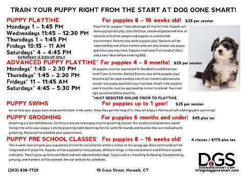 TRAIN YOUR PUPPY RIGHT FROM THE START AT