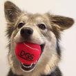 Dog Gone Smart Canine Center Dog Training Boarding Day
