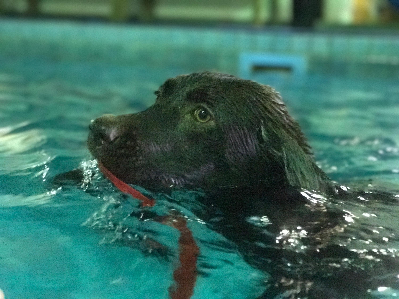 I can swim all by myself!