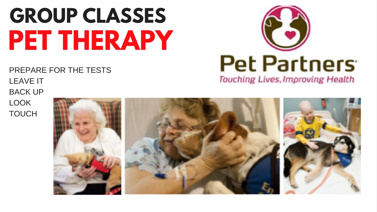 Pet Partners Pet Therapy