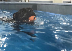 Swimming Sully