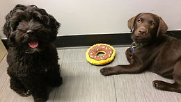 CHECK OUT OUR PUPPY PROGRAM