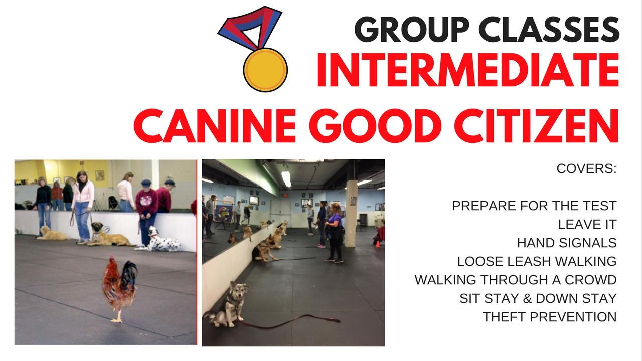 Intermediate/Canine Good Citizen