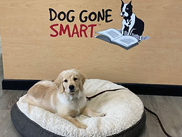 Puppy Board & Train Program Specialized Program for Pups 2-6  Months