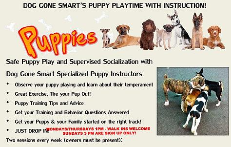 Puppy play advice