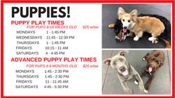 Puppy Playtimes!