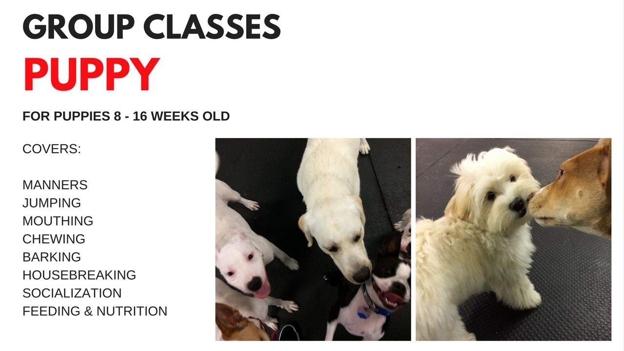 Fun in Puppy Class