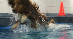 Flying into the water!