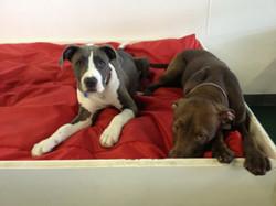Layla and Hershey