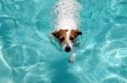 Just practicing the doggy paddle!