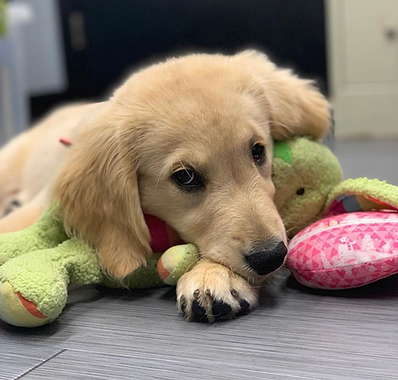 New Puppy!  We've Got You Covered!