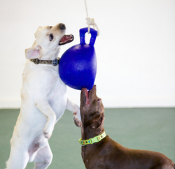 A Game of Tetherball!