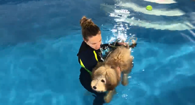 Puppy Swims-DROP OFF CURBSIDE PUPPY VALET -  WATCH ON OUR SWIM CAM!  M-F @10AM-$25