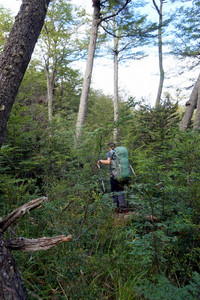 Man hiking through dense forest, Tierra del Fuego