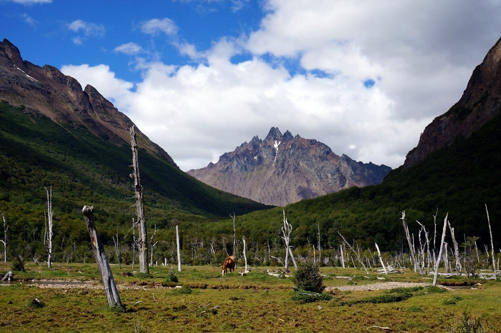 Mount Olivia, Tierra del Fuego