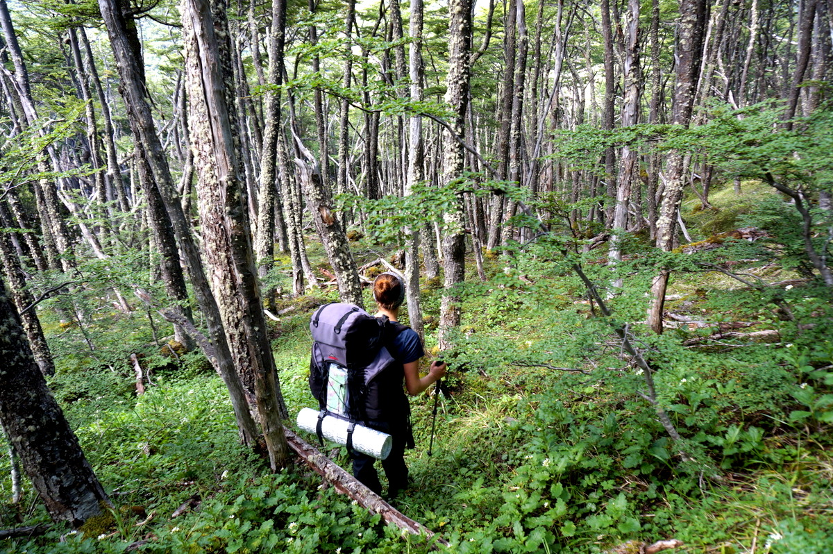 Hiking through dense forest, Tierra del Fuego