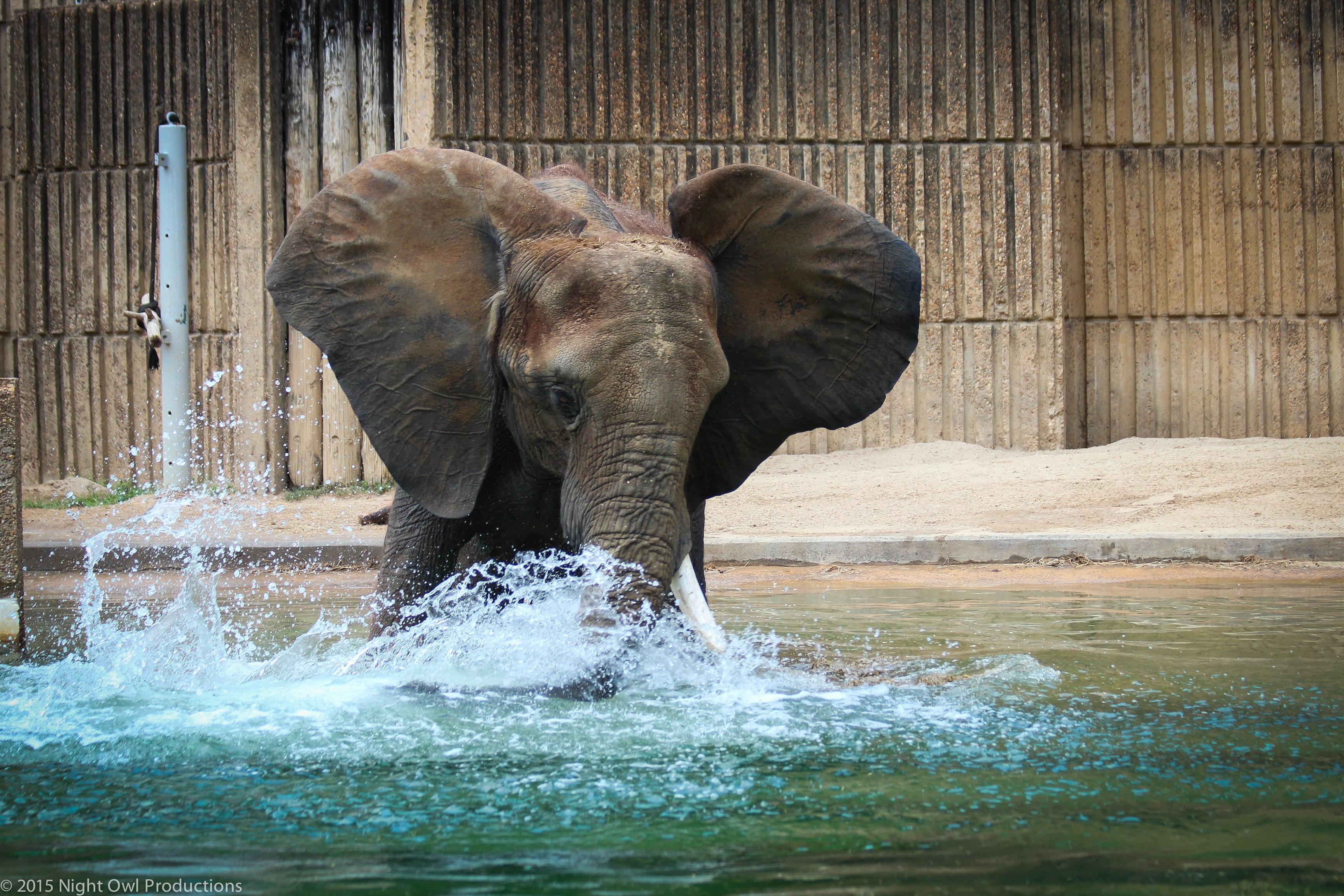 Elephant4-2
