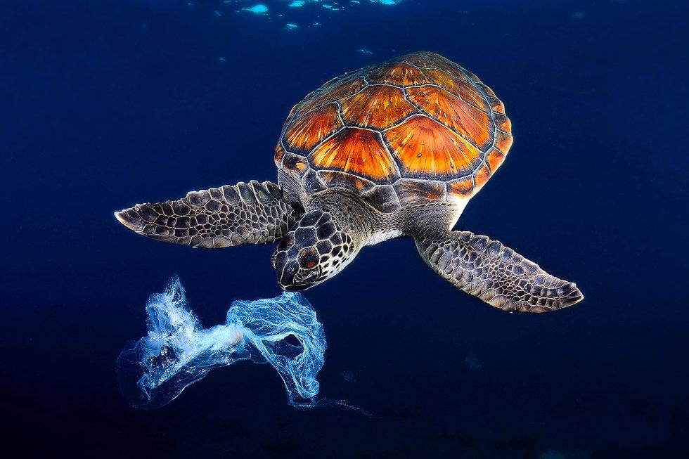 Turtle®_copy.jpg