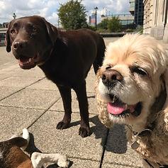 dog group walk