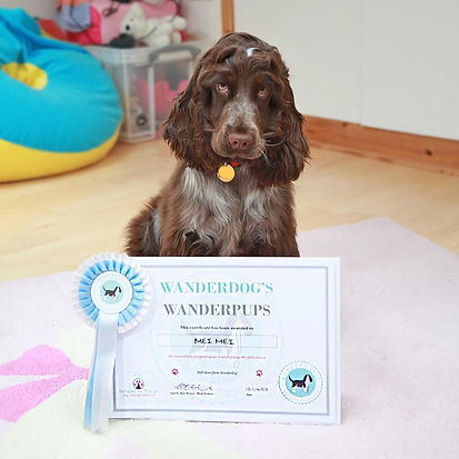 puppy training london bridge