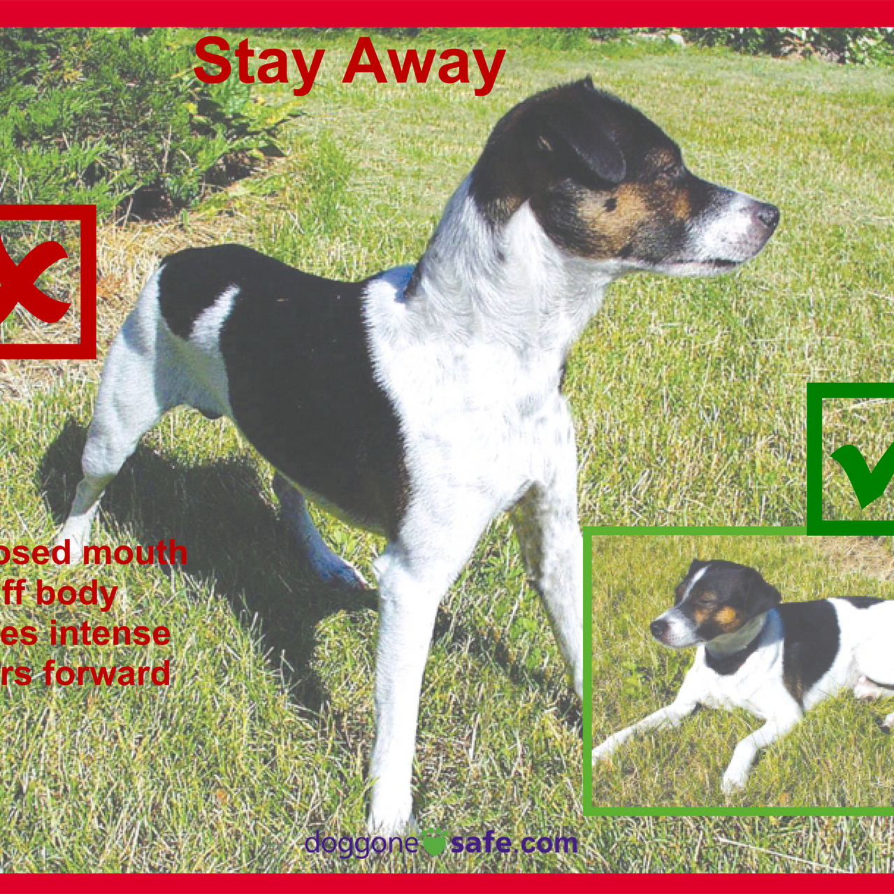 Signs of a Happy Dog and Stay Away_008