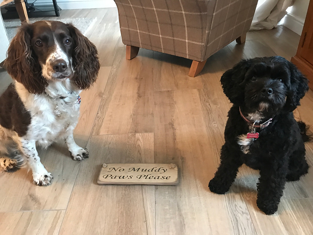 wanderdog, bermondsey, dog walker, pet sitter, london