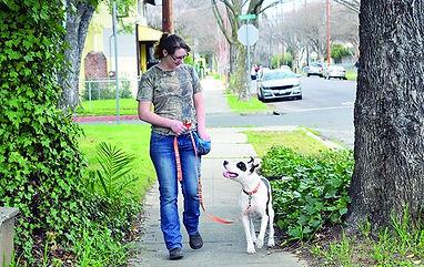 loose-leash-walking-image.jpg