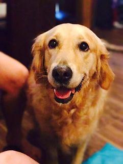 puppy training south london