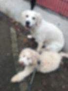 puppy class london