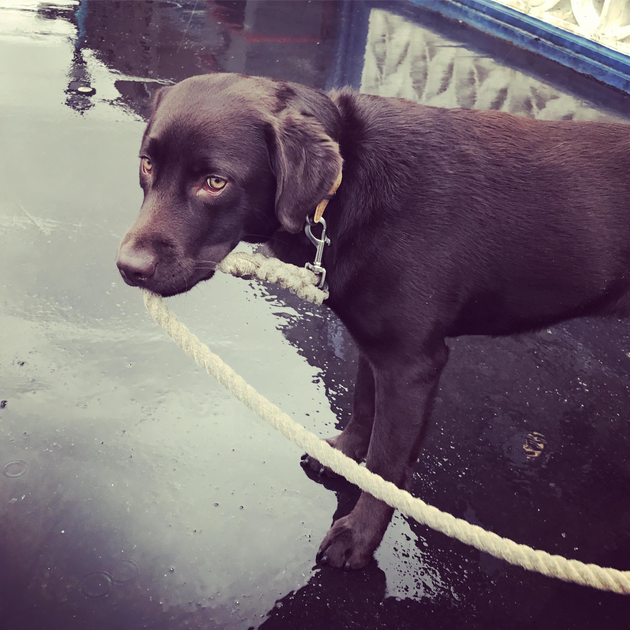southwark dog