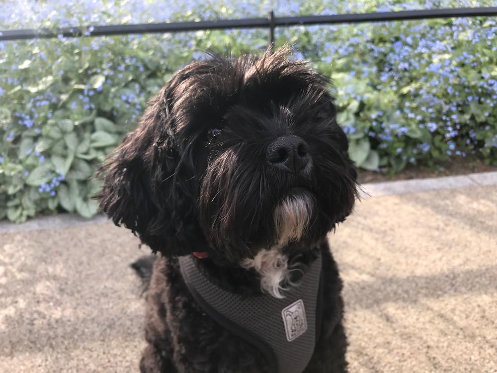 Wanderdog, dog walking, pet sitting, bermondsey, se1, se16, southwark