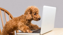 The Benefits of Online Puppy Training