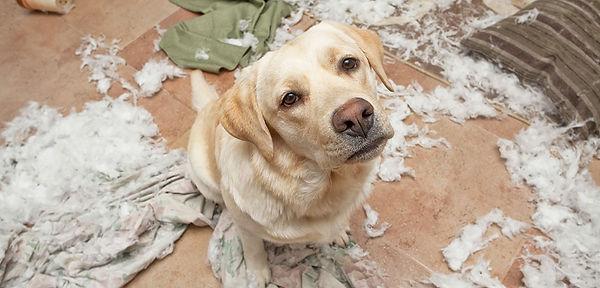 dog-care_common-dog-behavior-problems_ov