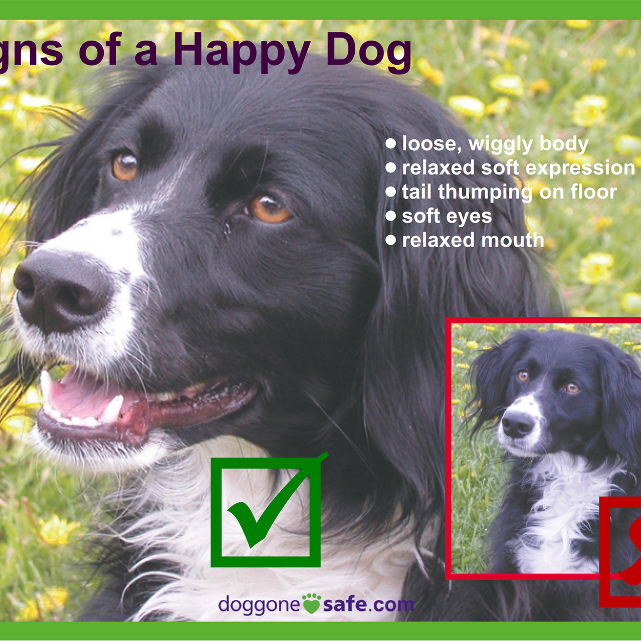 Signs of a Happy Dog and Stay Away_003