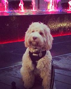 dog training london