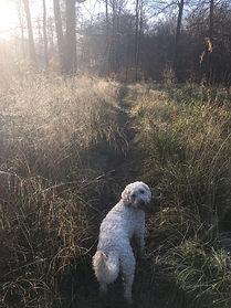 dog south london