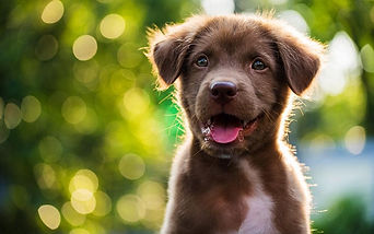 happy-puppy-xlarge.jpg