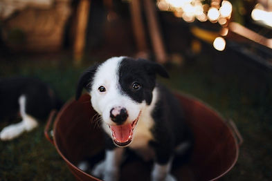 puppy-teeth.jpeg
