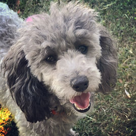 local puppy classes