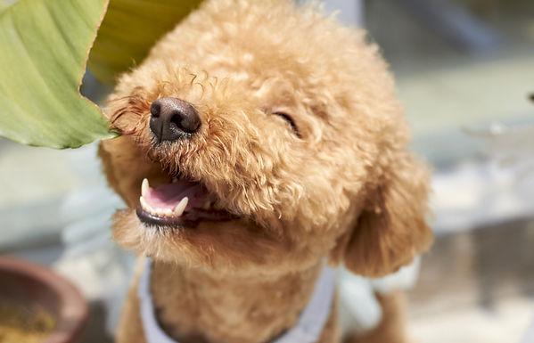 Wanderdog, Dog Walking, Running and Pet Sitting, Bermondsey